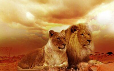 Lion : mon analyse astrologique